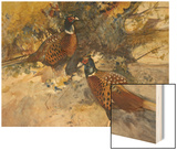 Cock Pheasants under a Beech Tree Wood Print by Frank Southgate