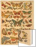 Histoire naturelle : papillons Wood Print