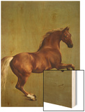 Whistlejacket, 1762 Wood Print by George Stubbs