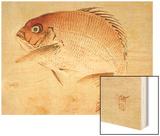 Bairei Gadan - Red Snapper Wood Print by Bairei Kono