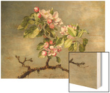 Apple Blossoms and a Hummingbird, 1875 Wood Print by Martin Johnson Heade