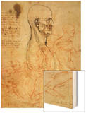 Anatomical Studies, circa 1500-07 Wood Print by  Leonardo da Vinci