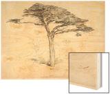 Old Cedar Tree in Botanic Garden, Chelsea, 1854 (Pencil on Paper) Wood Print by Samuel Palmer