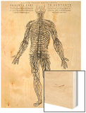 Nervous System Wood Print by Andreas Vesalius