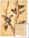 Ivory-Billed Woodpecker, 1829 Wood Print by John James Audubon