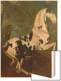 The Piebald Stallion at the Eisgruber Stud Wood Print by Johann Georg de Hamilton
