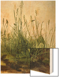 Great Piece of Turf - Study of Weeds, 1503 (W/C and Bodycolour on Vellum) Wood Print by Albrecht Dürer