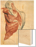 Human Anatomy, Muscles of the Torso and Shoulder Wood Print by Pierre Jean David d'Angers