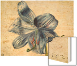 Study of a Lily, 1526 Wood Print by Albrecht Dürer