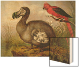Dodo and Red Parakeet, C.1773 Wood Print by William Hodges