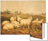 Sheep in a Meadow Wood Print by James Charles Morris