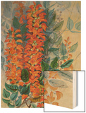 Australian Flower Wood Print by Marian Ellis Rowan