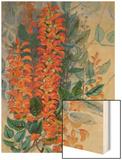 Australian Flower Poster by Marian Ellis Rowan