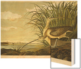 Male And Female Long Billed Curlew (Numenius Americanus) with the City of Charleston Behind Wood Print by John James Audubon