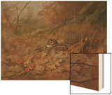 A Woodcock Nesting in Autumn Leaves Wood Print by Archibald Thorburn