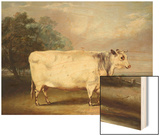 A Prize Cow Wood Print by William Henry Davis