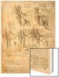 Drawing of the Muscles of the Spine Wood Print by  Leonardo da Vinci