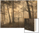 Sun Filters Wood Print by Brett Aniballi