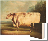 A Prize Bull Wood Print by William Henry Davis