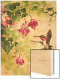 Hummingbird with Flowers Prints