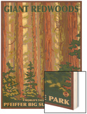 Pfeiffer Big Sur State Park, California - Giant Redwoods Wood Print by  Lantern Press