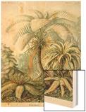 Ferns Wood Print by Ernst Haeckel