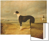A Black and White Greyhound in an Open Landscape, with Hunters and Huntsmen Beyond Wood Print by John Barwick