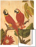 Tropical Red Pair Wood Print by Colleen Sarah