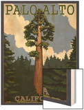 Palo Alto, California - California Redwoods Wood Print by  Lantern Press