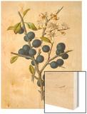 Blackthorn Wood Print by F. Edward Hulme