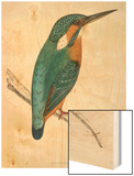Kingfisher Sitting on a Thin Branch Wood Print by Reverend Francis O. Morris