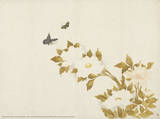 Peony Flowers and Butterflies, c. 1810-1839 Posters