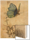 He Rides on the Back of a Butterfly Wood Print by Warwick Goble