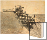 Horse-Drawn Team Wheat Farming Prints by Asahel Curtis