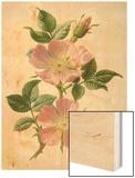 Pink Dog-Rose Wood Print by F. Edward Hulme