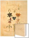 Tableau XVIII Wood Print by Pierre Jean Francois Turpin