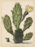Flowering Prickly Pear Cactus, 1683 Print by Herman Saftleven