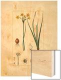 Tableau XLIV Wood Print by Pierre Jean Francois Turpin