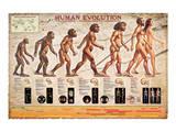 Human Evolution Print
