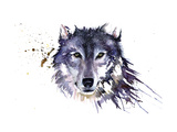 Snow Wolf Giclee Print by Sarah Stokes
