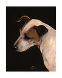 Jack Russel Study Giclee Print by Jane Booth