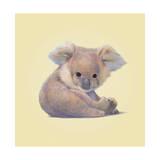 Koala Giclée-tryk af John Butler Art