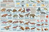 Mammal Evolution Poster