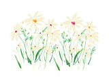 Marguerite Daisy Giclee Print by Summer Thornton