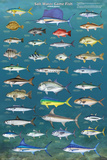 Salt Water Game Fish Posters