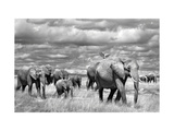 Elephants of Kenya Giclee Print by Marina Cano