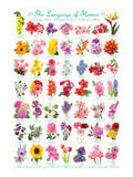 Language of Flowers Posters