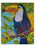 Toucan 1 Prints