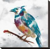 Geai bleu Reproduction transférée sur toile par Stephane Fontaine