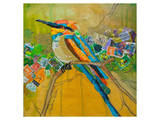 Rainbow Bee Eater Prints